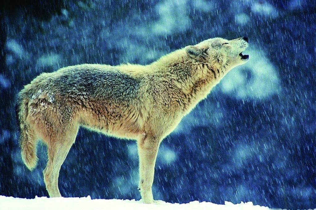 你的身后有一匹狼