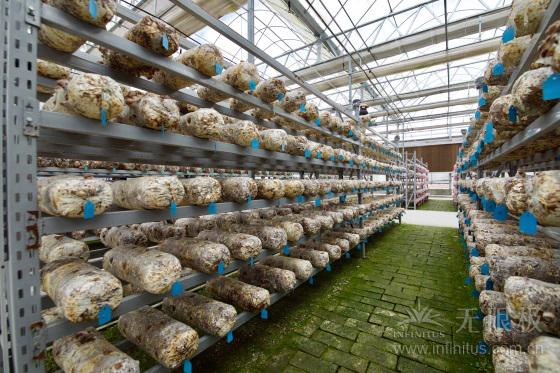 1分快3苹果版-1分快三app下载香菇种植基地照片