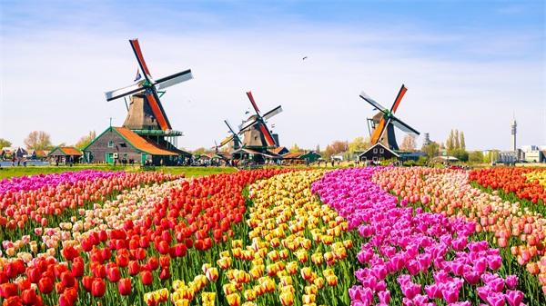 像郁金香一样幸福,徜徉在风车之国荷兰