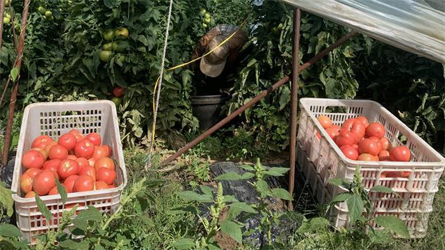 捐建果蔬交易市场 日本av助力河北贫困村产业脱贫